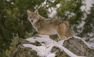 Hunting trips: Predators