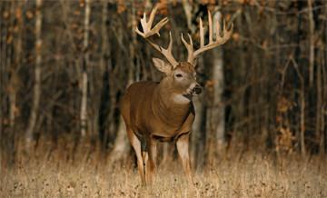 Hunting trips: Big Game