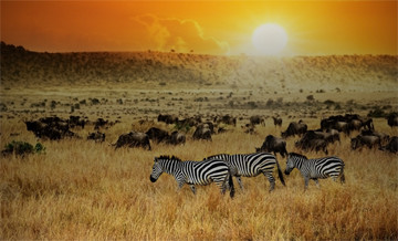 Hunting trips: Africa
