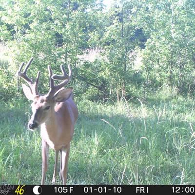 Late Season Management Whitetail Hunt
