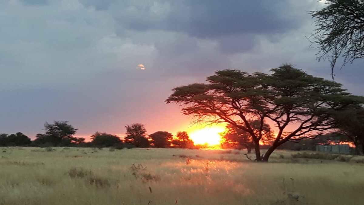 5 Non-Trophy Warthog Package / Namibia - BookYourHunt.com